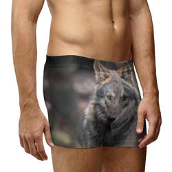 Трусы-боксеры мужские Волк - санитар леса цвета 3D — фото 2